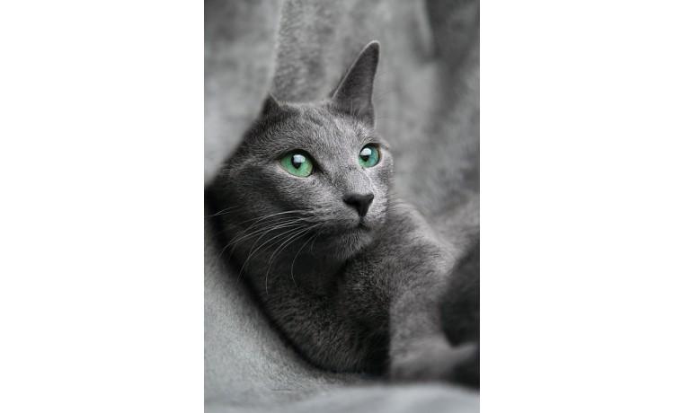 cat-1435590_960_720.jpg