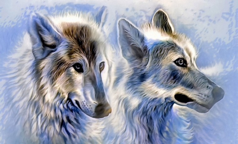 icewolf-as-canvas-1716638_960_720.jpg