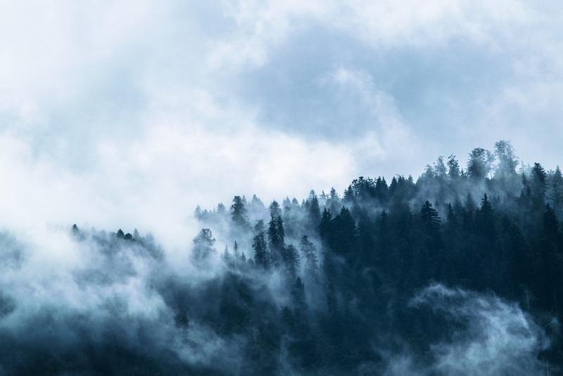 fog-1535201_960_720.jpg
