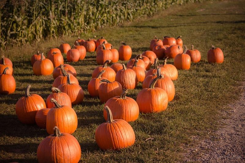 pumpkin-2595310_960_720.jpg